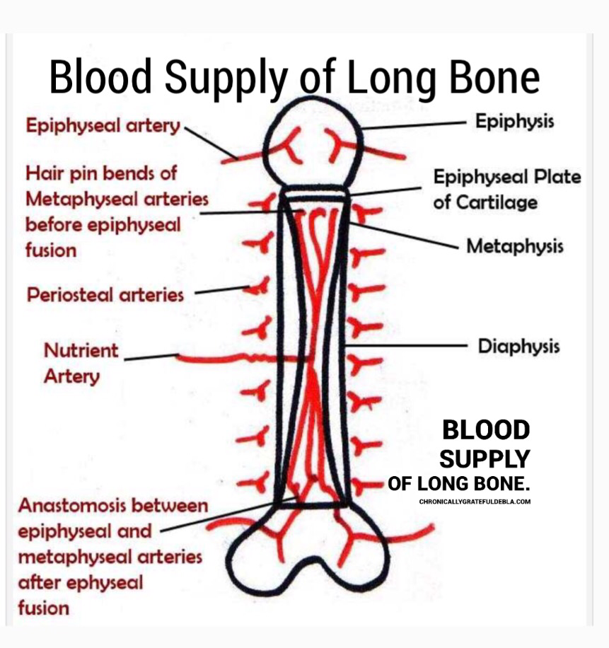 blood and bone Bone marrow/peripheral blood : cord blood: bone marrow donation requires surgery under general anesthesia donors may experience temporary discomfort and/or pain.